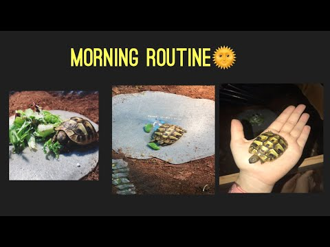 Download Hatchling Hermann's Tortoise Morning Routine Mp4 HD Video and MP3