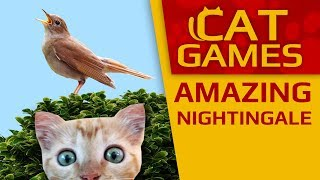 CAT GAMES - Amazing singing nightingale! (VIDEO FOR CATS TO WATCH) 3 HOURS 4K