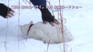 玉之丞さま萌え動画21~冷めてーっ