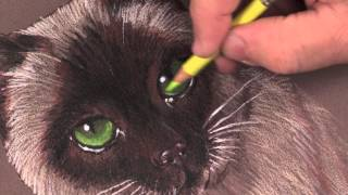 Paint Cat Eyes in Colored Pencil with Mark Menendez