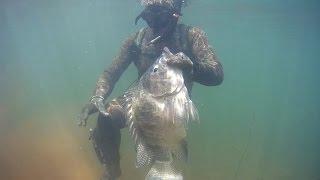 Pesca Sub - Tilapia -  Branconas 3,855kg