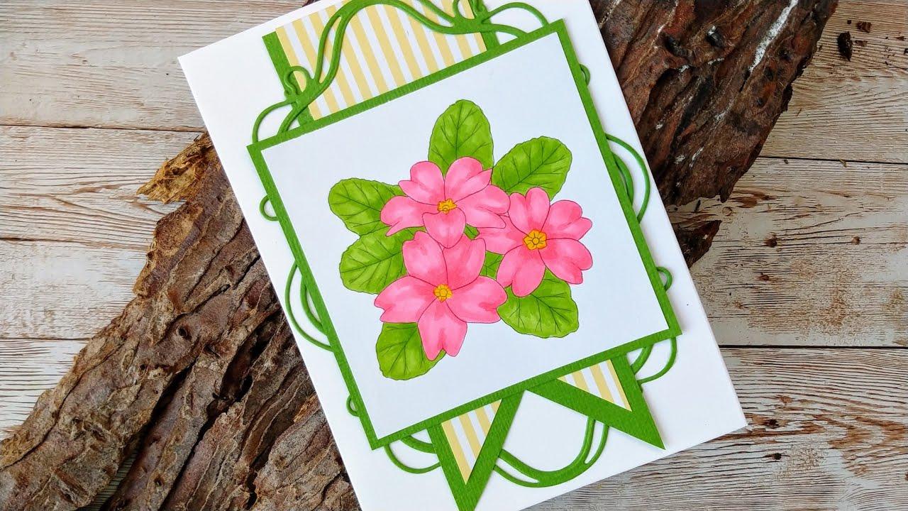 Colouring Primula