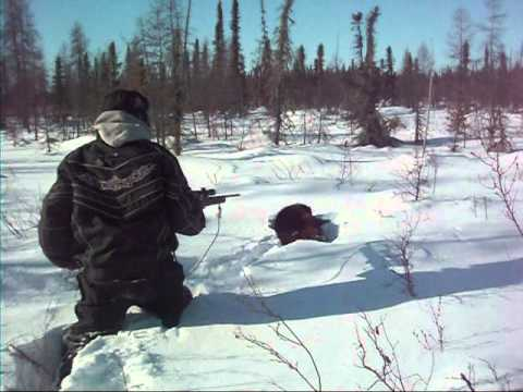 Trapping In The Wild North 05