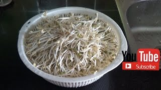 How to grow mung bean sprout at home very Easy with Plastic basket