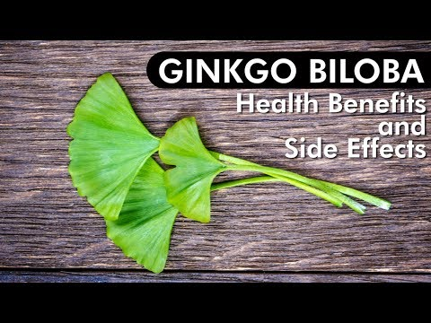 Ginkgo Biloba Review of Benefits & Side Effects