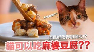 貓咪可以吃麻婆豆腐?本丸的終極干擾戰術!【貓副食食譜】好味貓鮮食廚房EP163