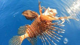 Denizlerin En Zehirli Balığını Yakaladık / Bu Balık İnsanı Öldürebilir !!