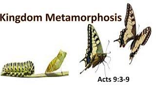Kingdom Metamorphosis