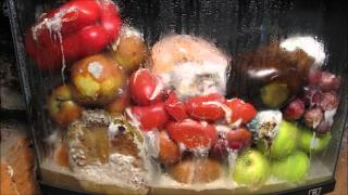 Rotting Fruit Timelapse - Video Youtube