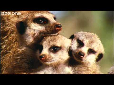Как прекрасен мир - красивый ролик BBC