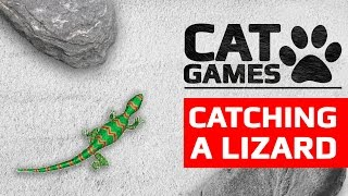 CAT GAMES - 🦎 CATCHING A LIZARD 60FPS (Entertainment video for cats to watch)