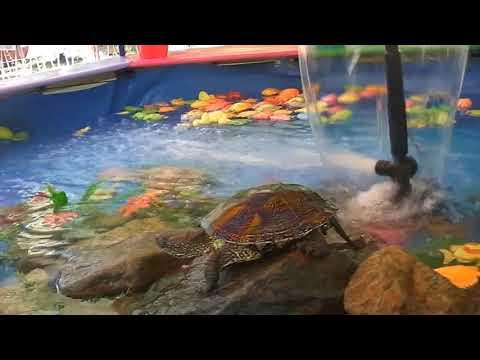Рыбалка Для Детей - Развлекательная Рыбалка | Fishing For Kids