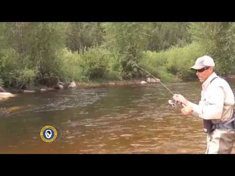 Spinning Rods for Trout…
