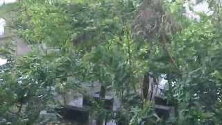 preview picture of video 'Le vent de Bejisa en début d'alerte rouge à La Possession'