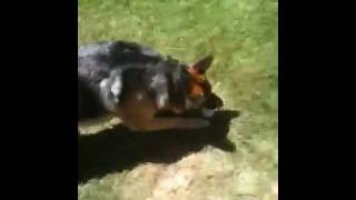 Reno is a big Puppy - Video Youtube