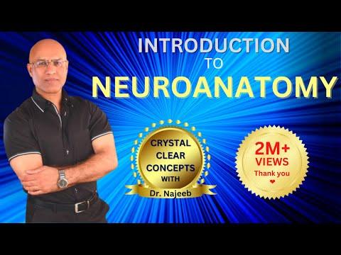 Intro to Neuroanatomy - Neurophysiology - Neuroscience - Central ...