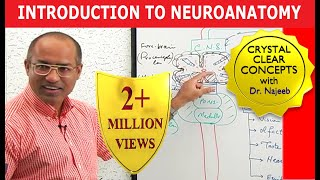 Introduction to Neuroanatomy - Neuroscience - Neurophysiology - Central Nervous System