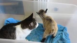 Подборка приколов с животными/ Кошки #6