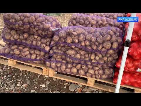 На территории Республики Калмыкия Управлением Россельхознадзора проведен фитосанитраный контроль подкарантинной продукции