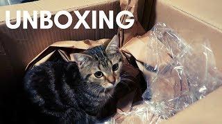 Brettspiel Unboxing - Asmodee Highlights? | Brettspiel Geeks | Brettspiele