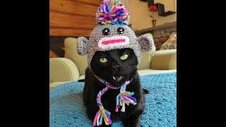 Приколы! подборка СМЕШНОГО видео котов! 20 мин смеха! подборка 2017 Funny Cats Compilation 20 min