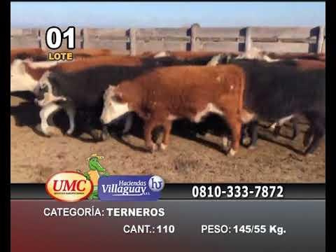 Lote 110 Terneros en La Paz, Entre Ríos