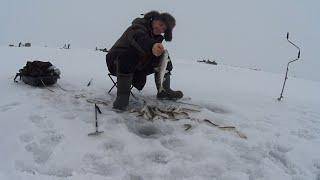 Отчеты о рыбалке на сахалине за октябрь 2020