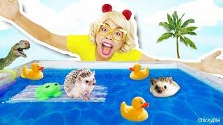 สร้างสระว่ายน้ำในฝันให้เม่นแคระ หรูมาก I ชิคกี้พายกับสัตว์เลี้ยง DIY POOL 💖 ชิคกี้พาย
