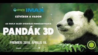 Pandák 3D - Az IMAX saját gyártású természetfilmje