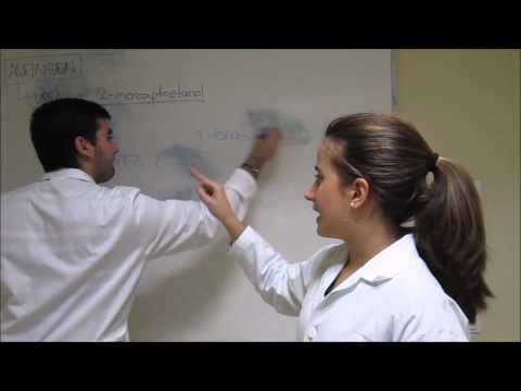 Presentación diabética escuela