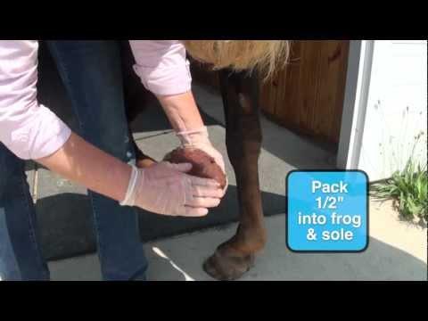 Come raffreddare lo zoccolo del cavallo dopo un lavoro intenso