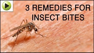 Insect Bites - Natural Ayurvedic Home Remedies