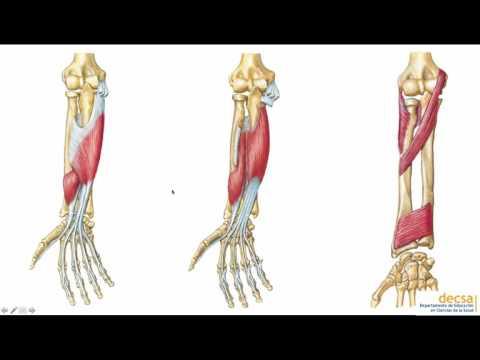 Dolor de espalda debajo de las costillas hacia atrás en las mujeres