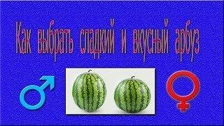 Как выбрать сладкий красный вкусный арбуз