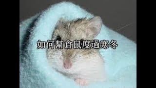 【喵桑】如何幫倉鼠度過寒冬