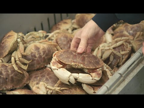 Youtube Video Still for The Value of U.S. Jonah Crab Products