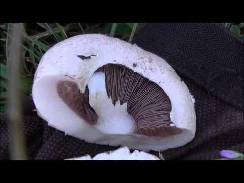 I migliori mezzi per eliminazione di un fungo su unghie