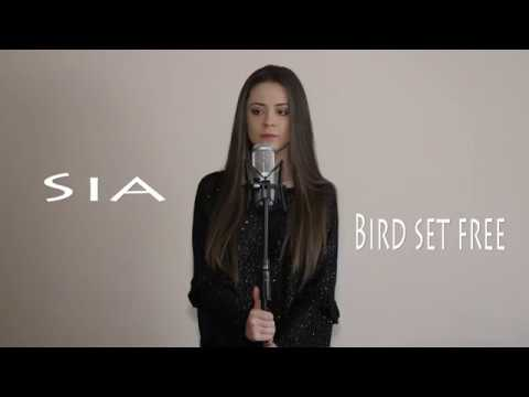 Sia - Bird set free | Daria T - Cover