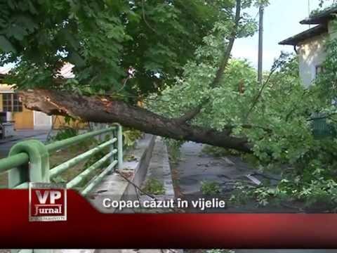 Copac căzut în vijelie