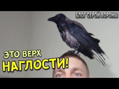ХАМСТВО!  Ворона села на голову /  Ворона сіла на голову