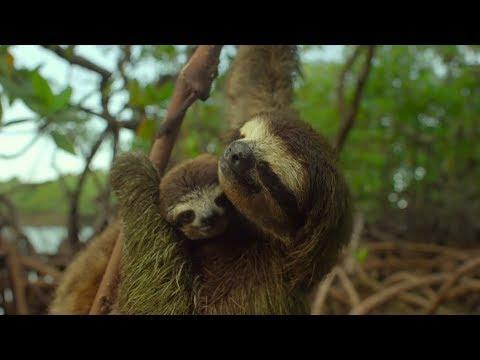 《地球:奇蹟的一天》中文配音黃信堯導演想養長頸鹿 笑言最近養的寵物是蚊子