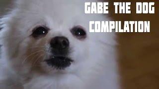 GABE THE DOG FUNNY COMPILATION|Гейб Собака Смешная Подборка