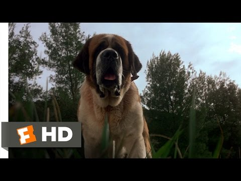 Cujo (1/8) Movie CLIP - A Bat Bites Cujo (1983) HD