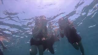 一生忘れられない海の世界へ。モアルボアルで過ごすマリンライフ