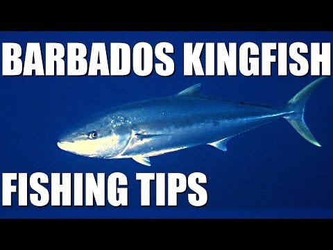 Kingfish fishing in Barbados