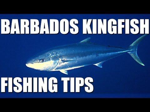 Kingfish fishing in Barbados