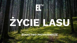 Życie lasu – bogactwo przyrodnicze