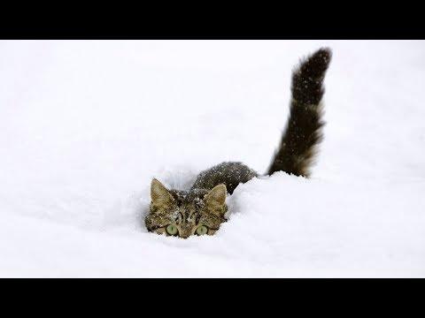 Bucuria primei zăpezi