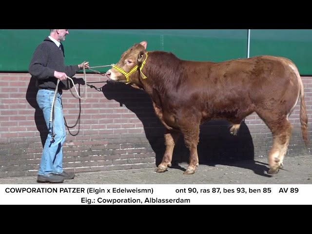 Limousin Cowporation Patzer NL681703069