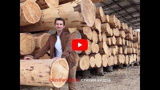 Сохранение и сушка бревен для уникальных домов | Эксклюзивные кедровые дома | izkedradom.ru